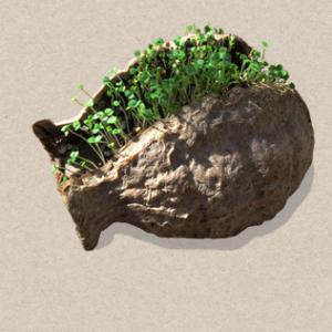 Seedbom - grenade