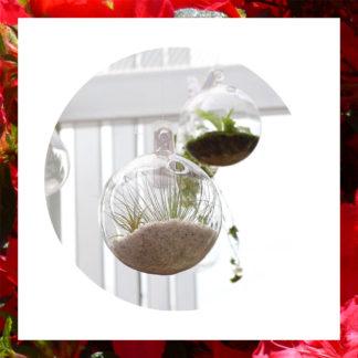 Le terrarium en verre