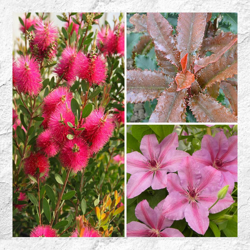 Coffret Plantes