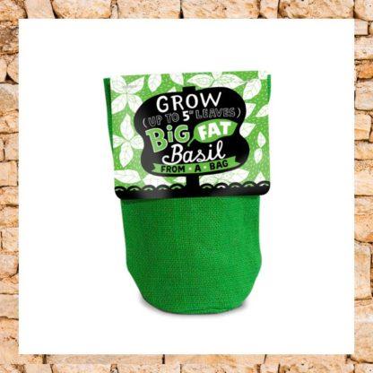 Basilic prêt à pousser