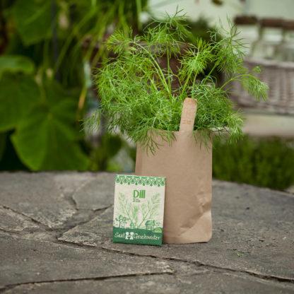 Kits à planter : Aneth