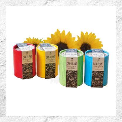 Kits à planter : en pot de céramique