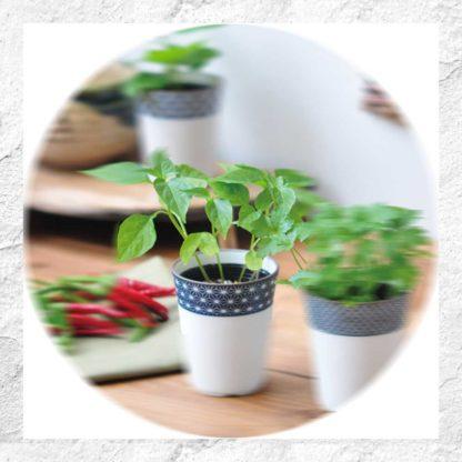 Yakumi : kit à planter - Takanotsume