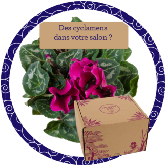 cyclamen : Hortus Box