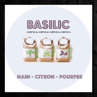 Basilic : trois variétés en prêt à pousser