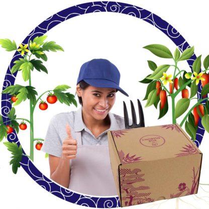 Tomates et poivrons : Box potagère
