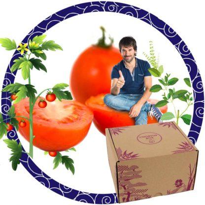 Tomates et basilic : Saveurs d'été