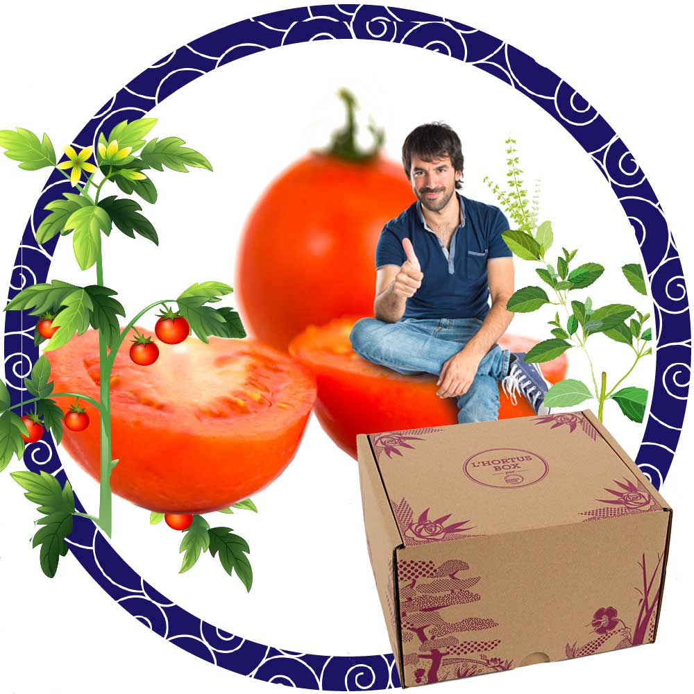 Tomates et basilic: Saveurs d'été