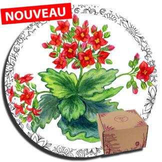 Kalanchoé : fleurs de printemps